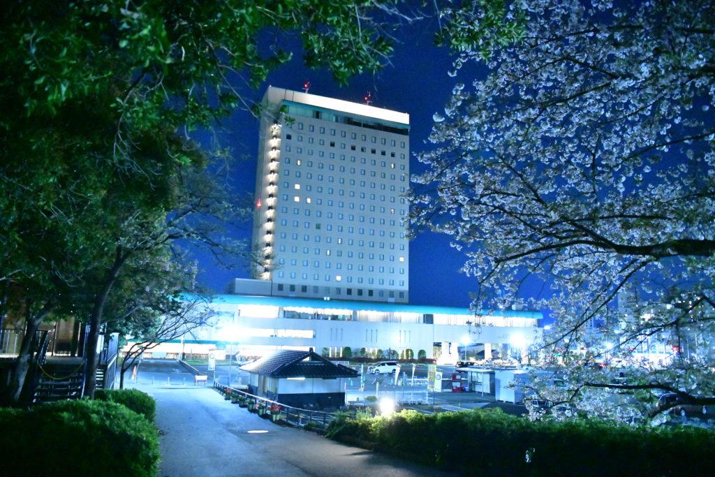 浜松城公園 夜桜見学